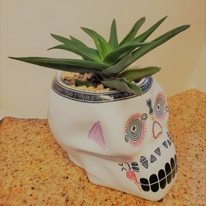 Other - Halloween Sugar Skull Planter with Aloe Succulent